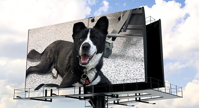 shelter_animal_billboard